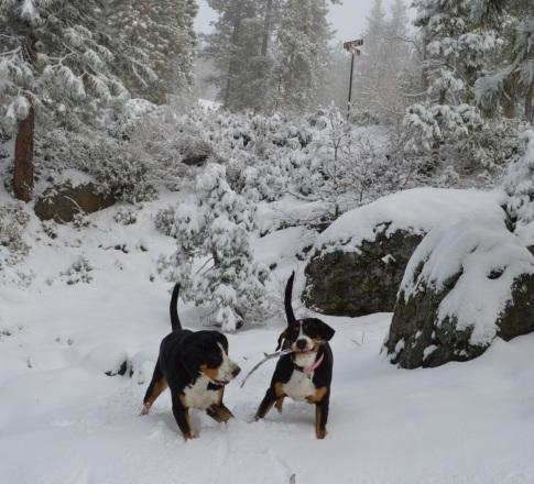 Mia & Emmie - February 2016