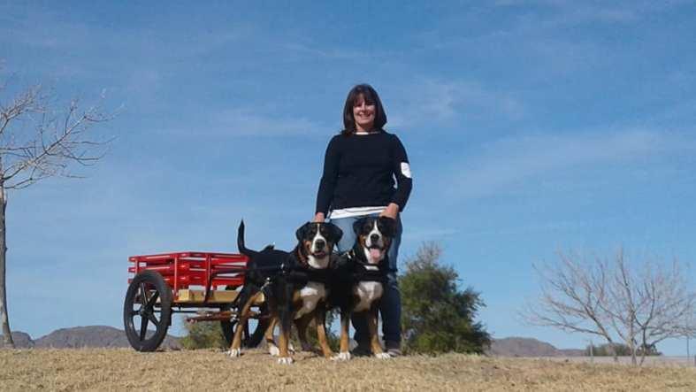 Sophie & Emmie 2018 Novice Brace Draft Dogs